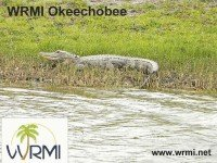 e-QSL WRMI — Radio Miami International США 02 июля 2015 года