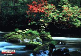QSL NHK World Japan Радио Японии Июнь Июль Август 2019 года