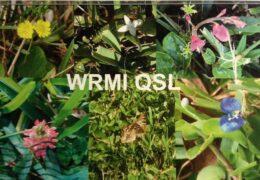 QSL WRMI США Февраль 2021 года